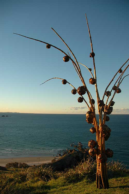 Arranged-Imagination-by-Teah-Fort,-artsCape-Byron-Bay-2005